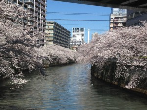 sakura2014_kon2
